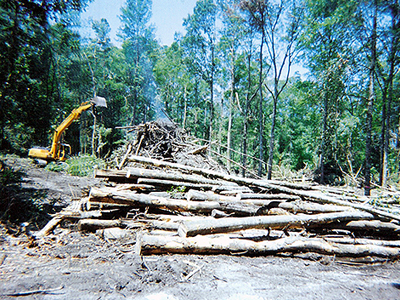 Wolfcreek, Land Clearing & Development Project